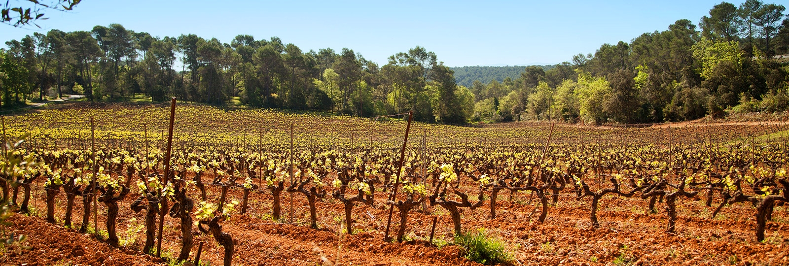 Vignobles à Lorgues